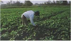 nông trại mầm đậu nành thanh mộc hương